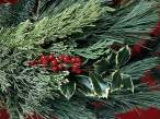 Holiday_Greens250780_9.jpg
